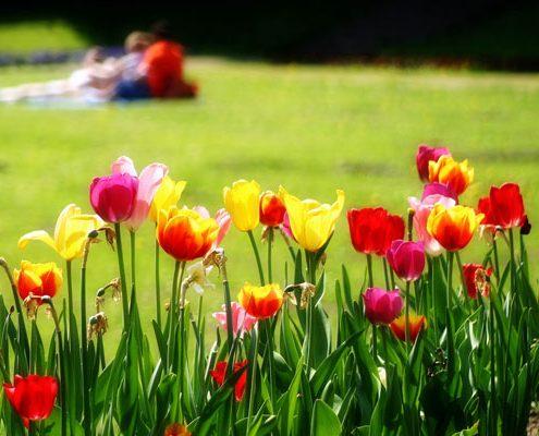 Mit dem Frühling kommt die Farbe wieder...