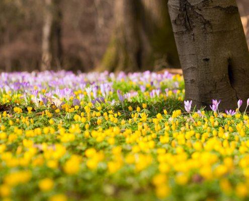 Juhu - wunderbare Frühlingszeit